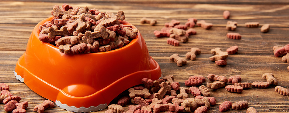 Plastic bowl with pile of dog food on wooden table