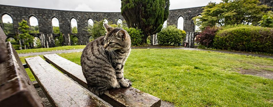 Street cat in Scottish park on rainy day.