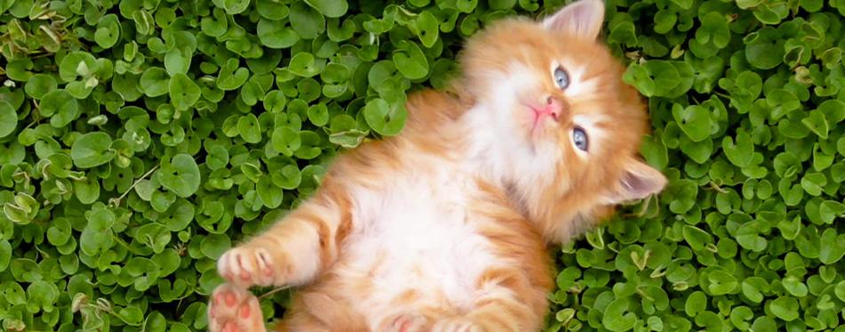 Tiny red kitten outdoors portrait