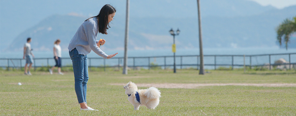 Woman training with her dog