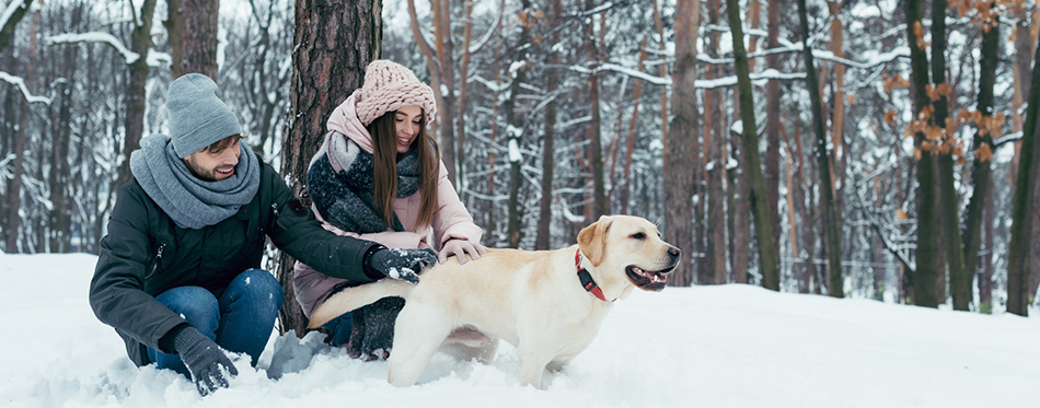 Young couple having fun together with dog in winter