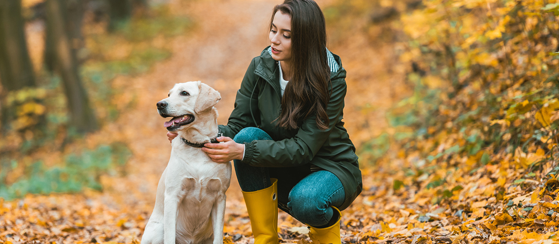 Young woman adjusting dog collar on golden retriever