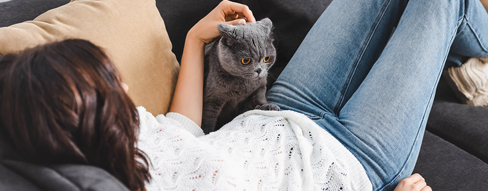 Young woman lying on sofa with scottish fold cat