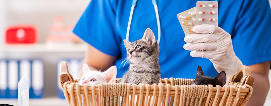 kittens in animal hospital