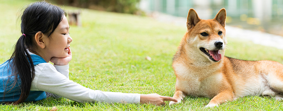 An Asian girl is playing with a dog in the park.