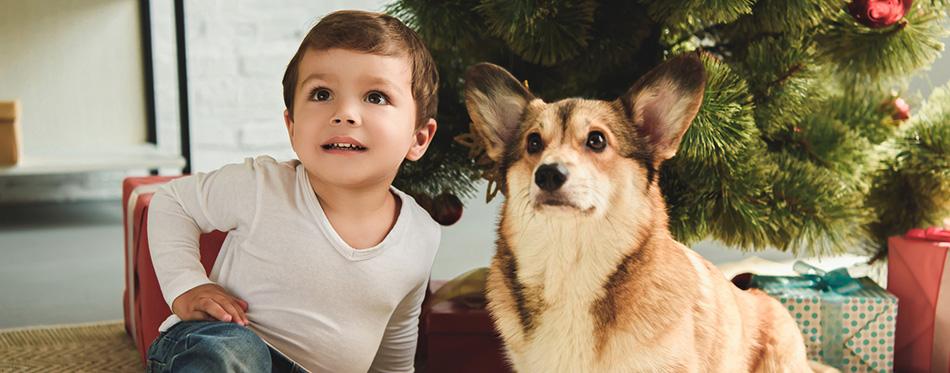 Child and welsh corgi dog sitting under christmas tree