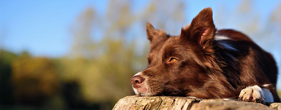 Dog lying on a stump