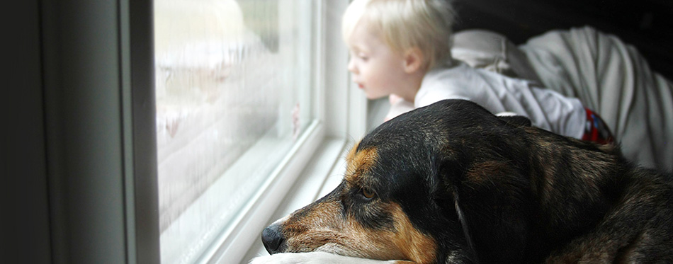 Pet Dog and Little Baby Looking Dreamily out Window