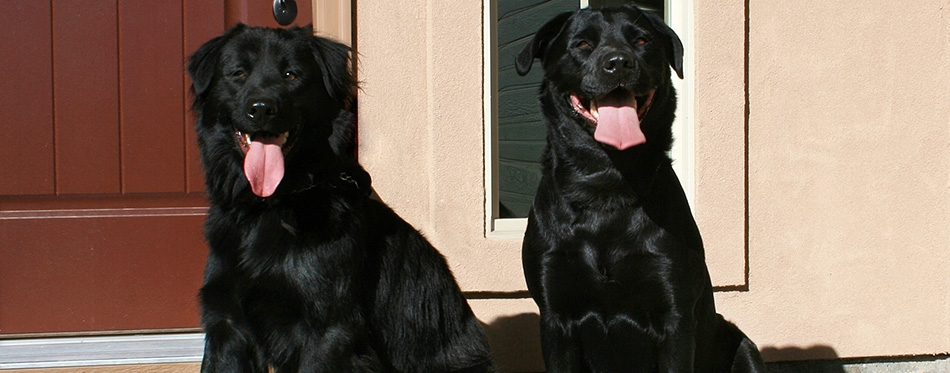 Two dogs sitting on porch