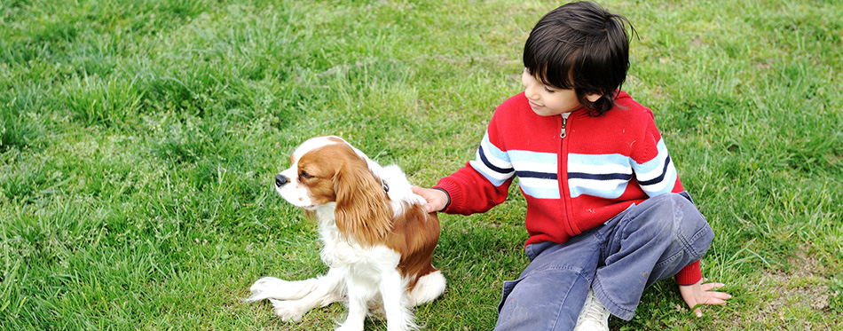 Young boy playing with a dog