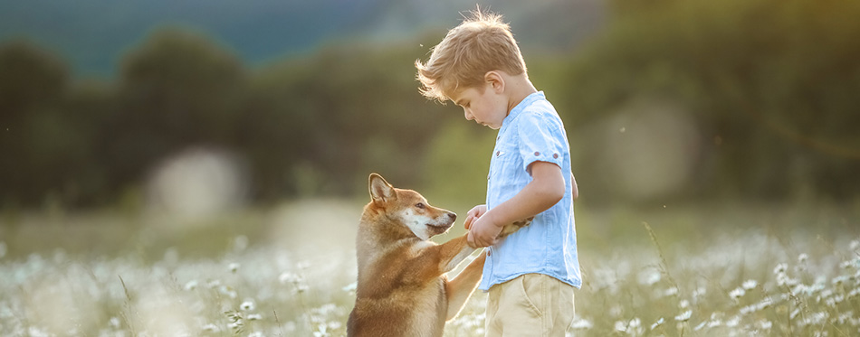 A dog is the best friend for a child