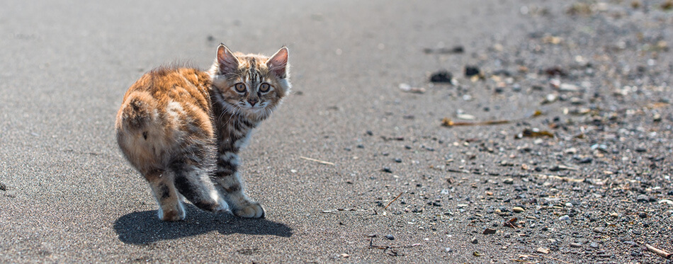 A little red kitten plays in the sand on the seashore.
