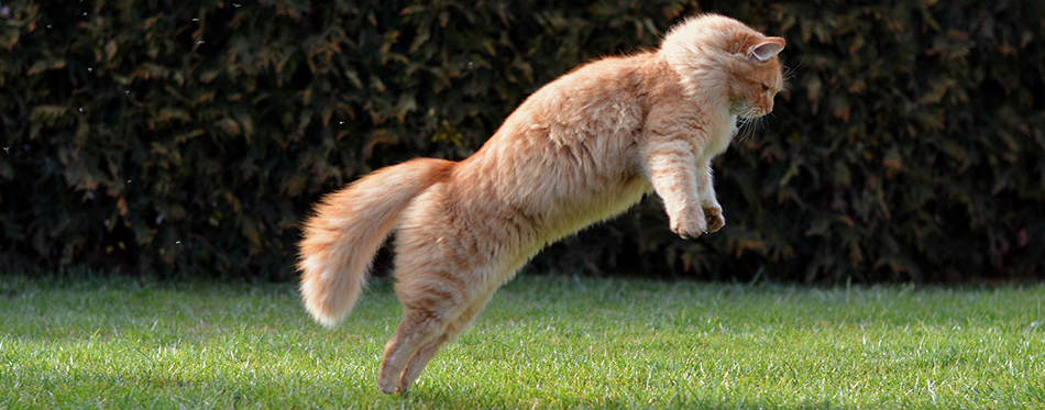 Big funny cat jumping on the garden