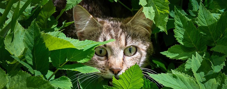 Cat hiding