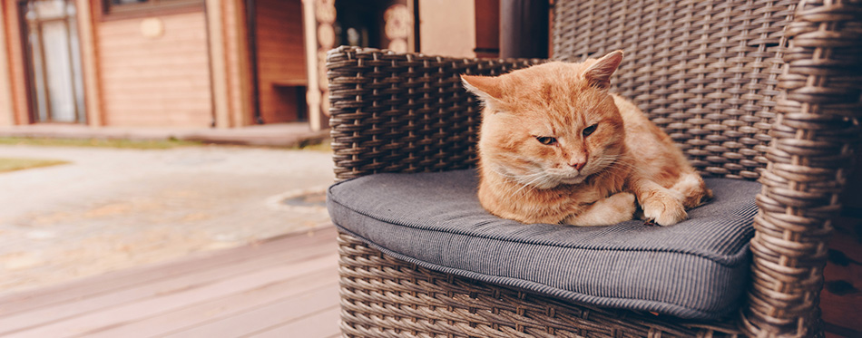 Cat lying on a chair outdoors