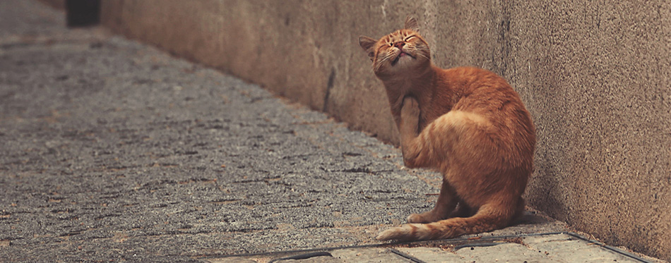 Cat scratching on the street