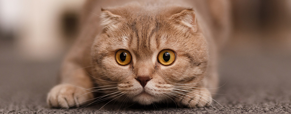 Cat's eyes