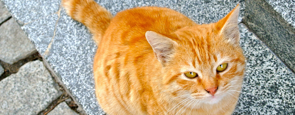 Close up of cute red-hair cat sitting outdoors