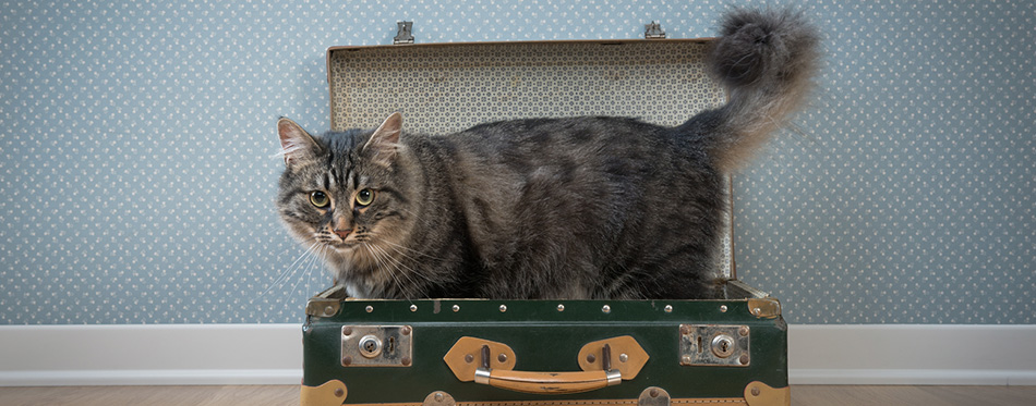 Cute cat in a vintage suitcase