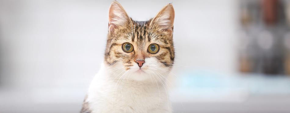 Cute funny cat