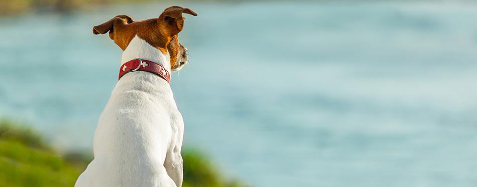 Observation des chiens