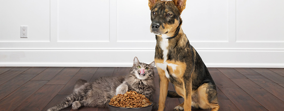 Dog with angry expression as cat eating from his bowl