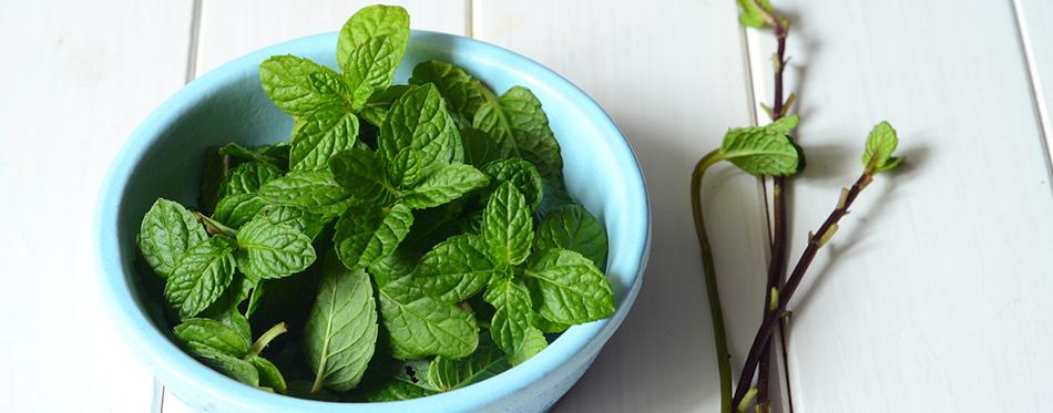 Fresh peppermint leaves