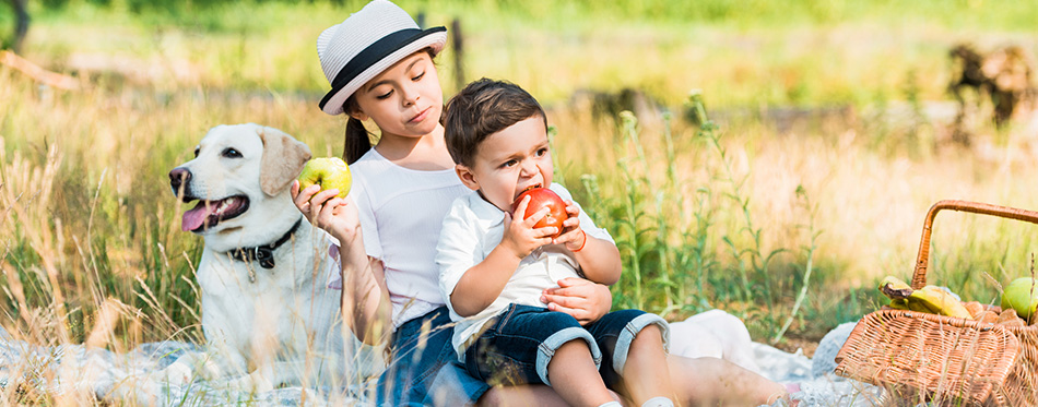 Happy siblings sitting on blanket at picnic and eating apples