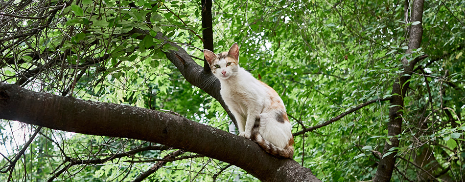 Homeless cat sits on a tree branch. color nature