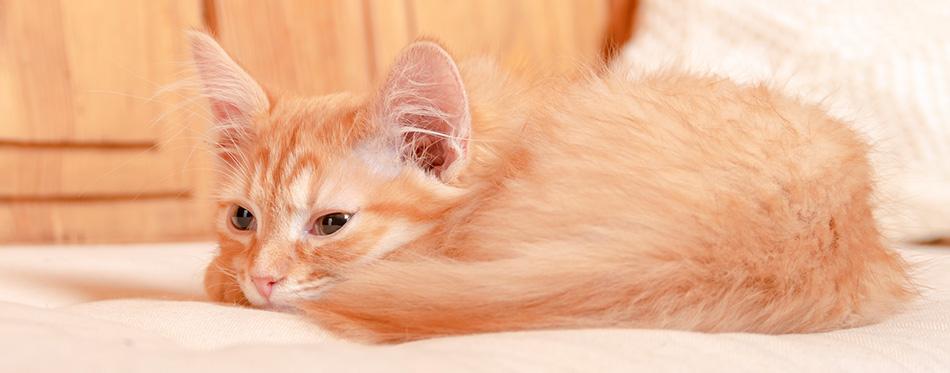 Kitten lying on a pillow