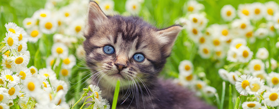 Kitten on flower lawn