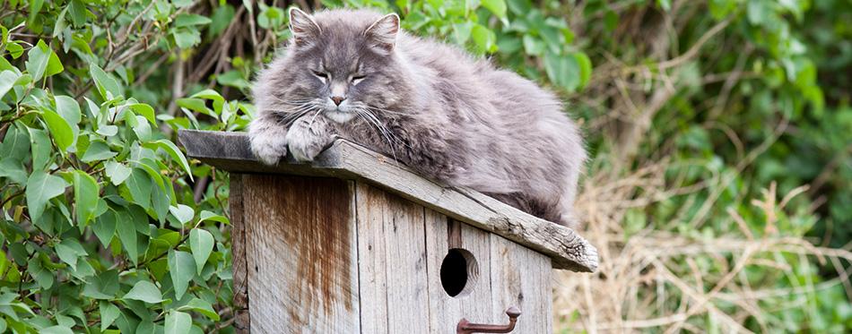 Pretty Wild Cat