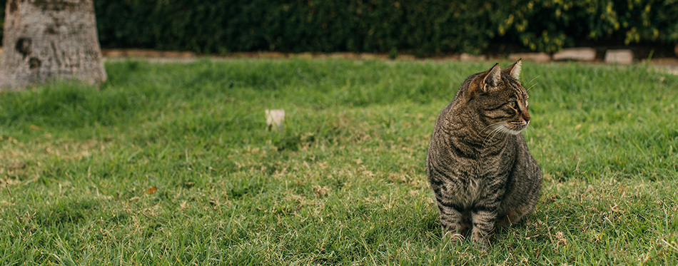 Selective focus of cute cat sitting on green grass