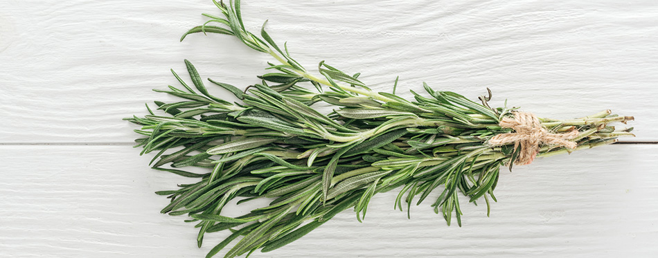 Top view of fresh green rosemary on white wooden table, panoramic shot