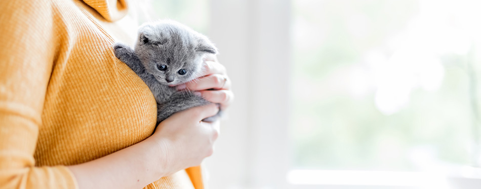 Woman holding grey british cat