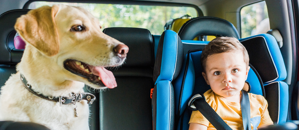 Adorable toddler boy in safety seat with labrador dog