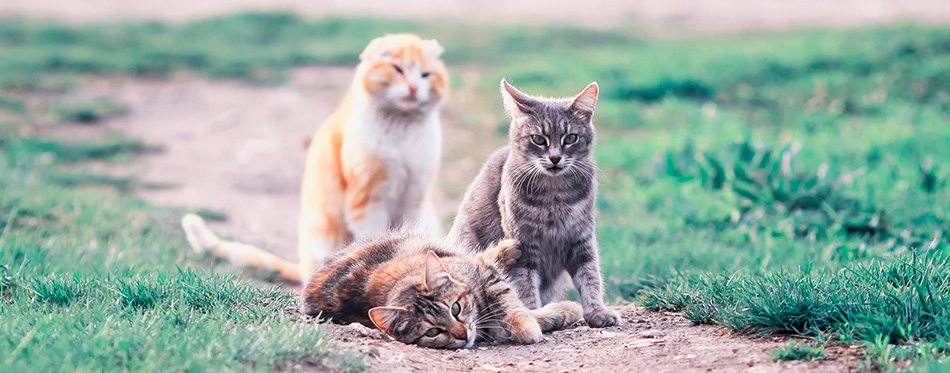 Cute cats lying on a green meadow in the early spring and play g