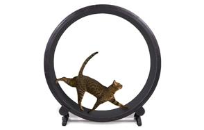 One-Fast-Cat-Exercise-Wheel-image