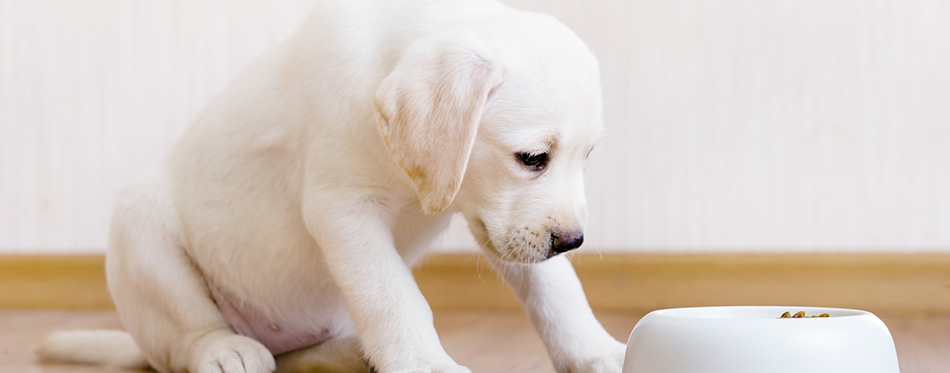 Puppy sitting near his bowl with food