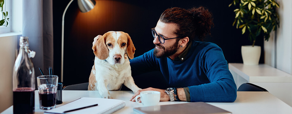 Cheerful smiling handsome caucasian man sitting in his office and playing with his dog.