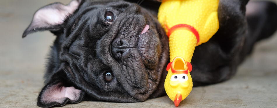dog with a chicken toy