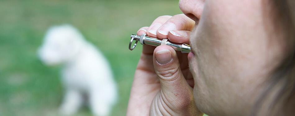 Pet-Owner-Training-Dog-Using-Whistle