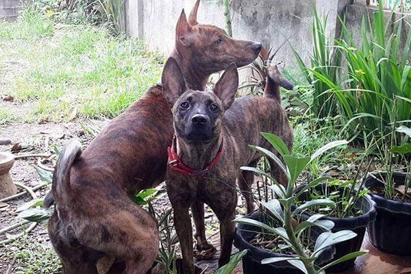 Two dogs in backyard