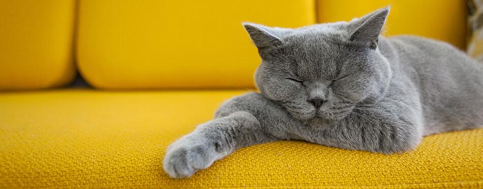 Cat sleeping on a mustard yellow sofa.