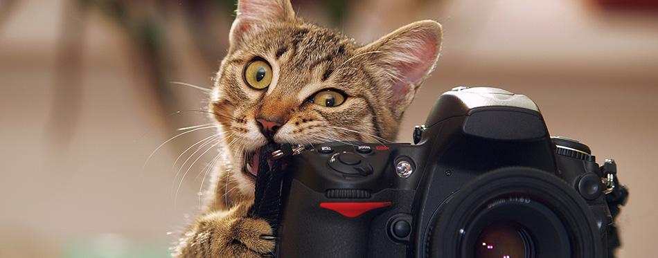 Cute cat biting a camera