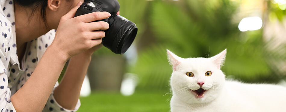 Professional animal photographer taking picture of beautiful white cat outdoors
