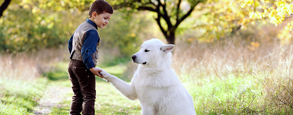 little boy with his nice white dog in park