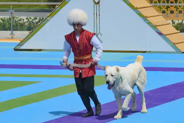 A man dressed in a national costume runs with his border guard shepherd dog