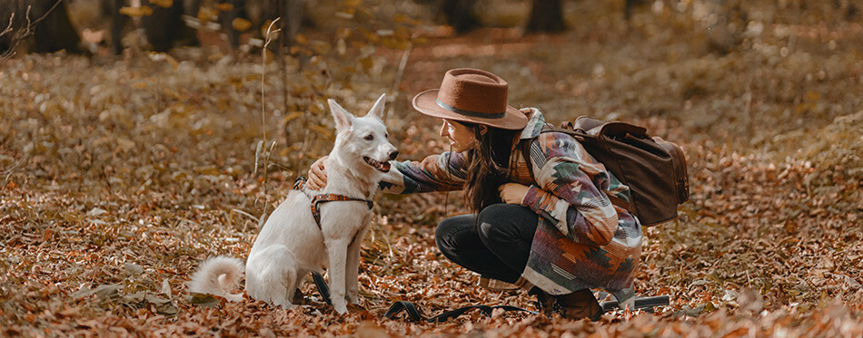 Stylish woman caressing adorable white dog in sunny autumn woods.