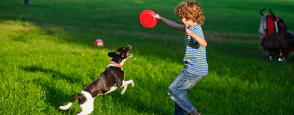 The boy plays on a lawn with dog.